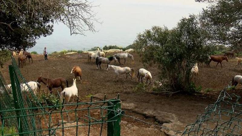 Kayıp atlarla ilgili ayrıntılar ortaya çıktı