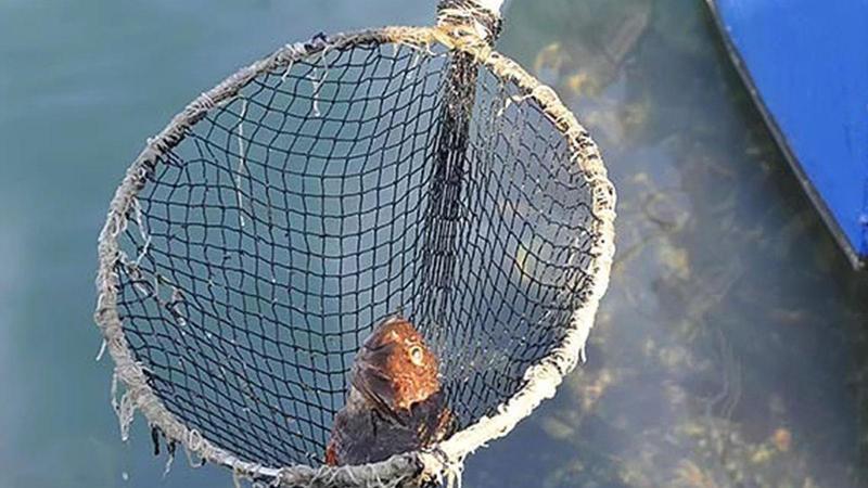 İstanbul'da balık ve yengeç ölümlerinin nedeni belli oldu
