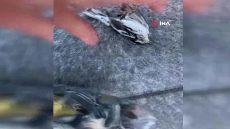 Göç eden kuşlar gökdelenlere çarparak öldü
