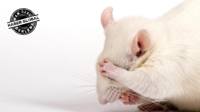 Deney faresi nasıl depresyona girdi? Gördüğü şeyler...