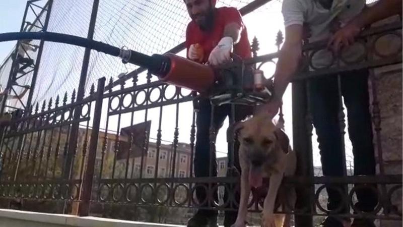 Demir korkuluklara sıkışan köpek böyle kurtarıldı