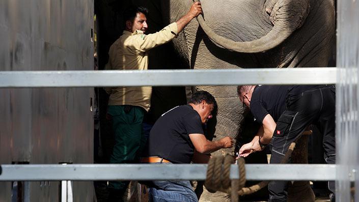 'Dünyanın en yalnız fili'ne Cher yardım etti