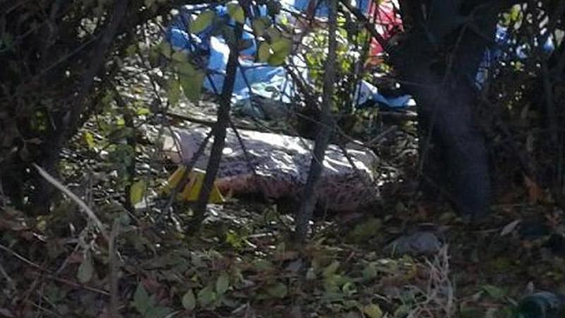 Yol kenarında bebek cesedi bulundu