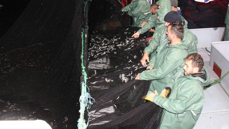 Karadeniz'de hamsi avı yasağı sona erdi