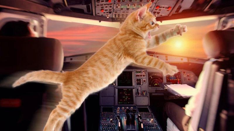Şaşkınlık veren olay: Pilota havada kedi saldırdı