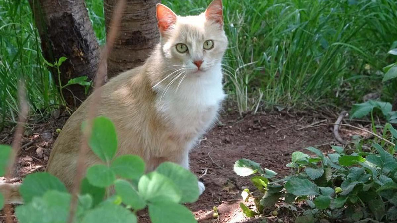 Valilik kediye şiddet iddiasını yalanladı