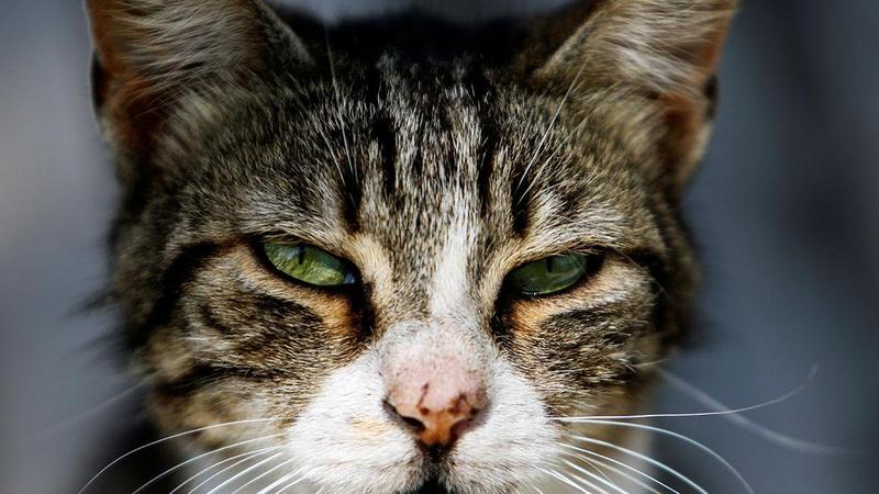 Karar tepki çekti: Kediler sokağa çıkamayacak!