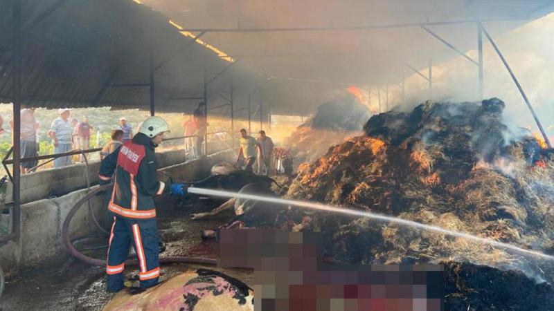 Ahırda korkunç yangın: 13 hayvan telef oldu