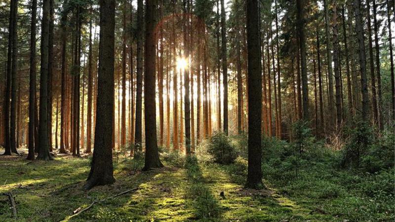 Ormanlara girişler yasaklandı