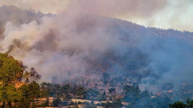Aydın'da iki ilçede orman yangını