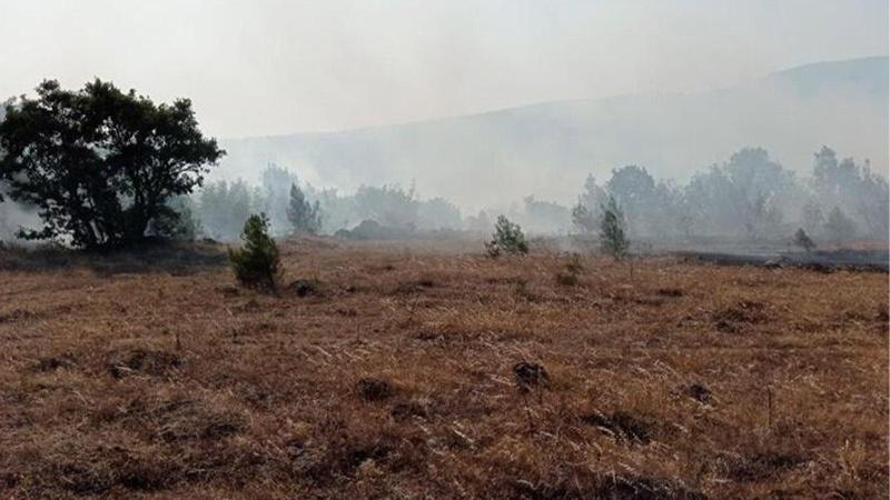 Balıkesir'de orman yangını! Ekipler bölgeye sevk edildi