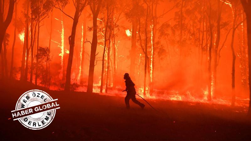 Avustralya yangını nasıl atlattı? Bir yıl sonra...
