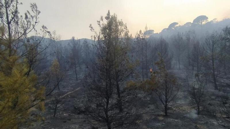 Aydın'daki orman yangını kontrol altında