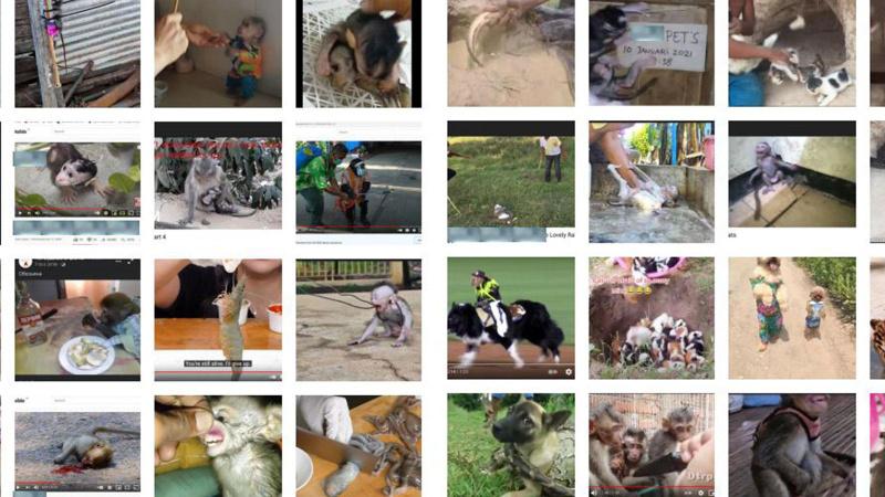 'Hayvan zulmü' videolarından milyonlar kazandılar
