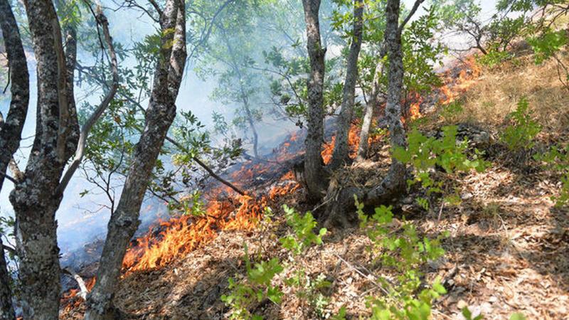 Tunceli ve Bingöl'deki yangında son durum