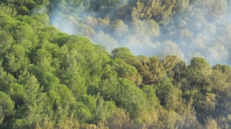 Balıkesir'deki orman yangını kontrol altında