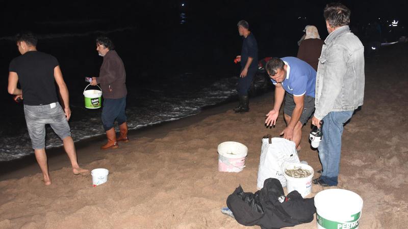 Balıklar kıyıya vurdu! Ellerinde kovalarla sahile koştular
