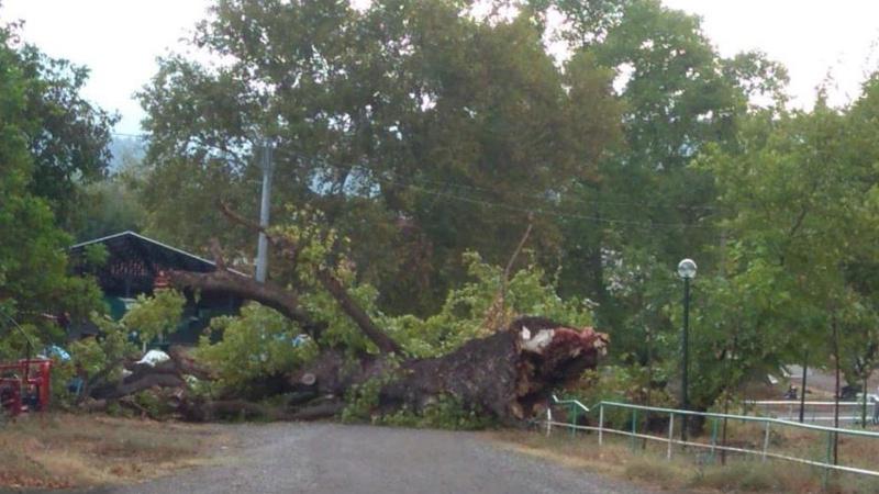 400 yıllık çınar ağacı fırtınaya direnemedi