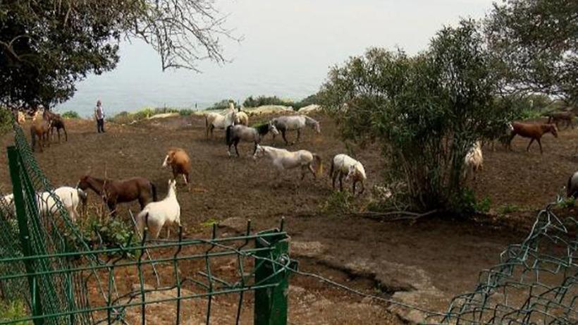 İBB'nin kayıp atlarıyla ilgili yeni ayrıntılar