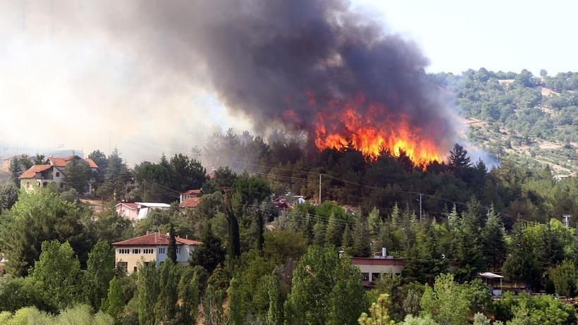 Uşak'ta orman yangını