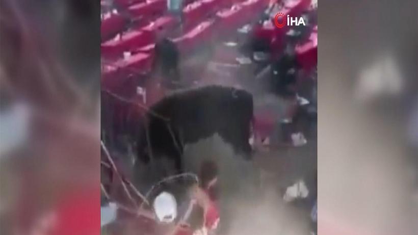 Meksika'da rodeo sırasında boğa seyircilere saldırdı: 10 yaralı