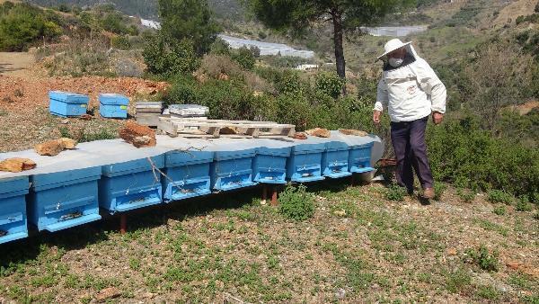Mersin'de arılarını kontrol eden adam hayatını kaybetti
