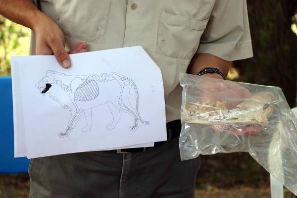 Kayseri'de 4 bin yıl öncesinde yaşayan hayvanlara ait kemikler bulundu