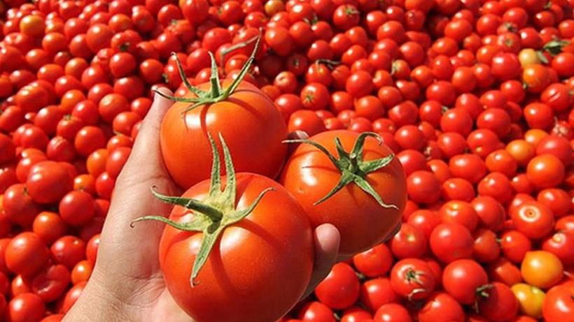 Tarladan markete domatesin fiyat yolculuğu