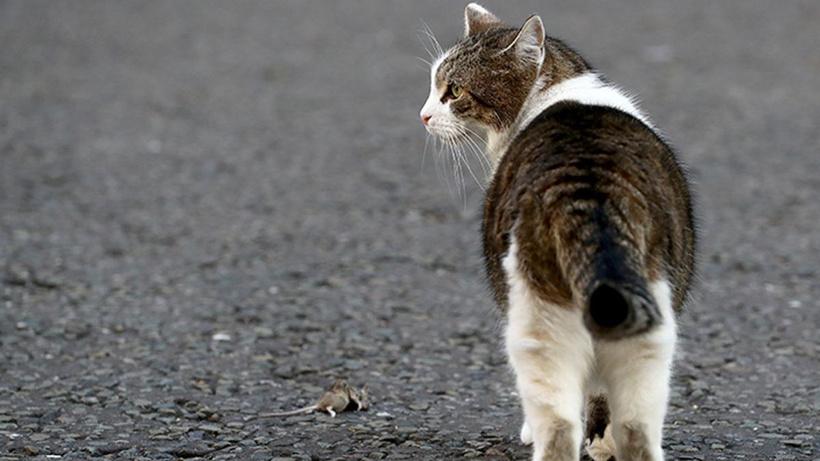 İngiltere'de ilk kez bir evcil hayvanda koronavirüs görüldü