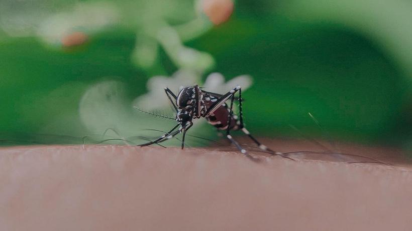 Uzmanlardan Asya Kaplan Sivrisineği uyarısı: Asıl tehdit İstanbul'da değil Karadeniz'de