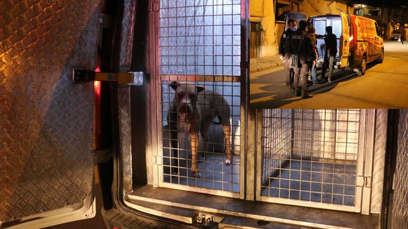Sivas'ta polis ve gece bekçisi pitbull saldırısına uğradı