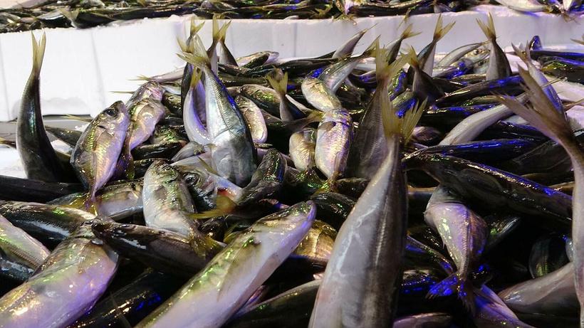 Balıkçı da vatandaş da bunu merak ediyor! İşte tezgaha etkisi