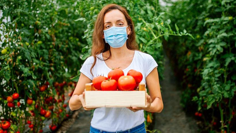 Koronavirüse karşı domates aşısı... Yenebiliyor!