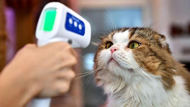 Dünyada ilk! Hayvanlar için ilk korona aşısı tescillendi