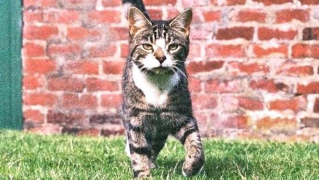 İskoçya'da 10 yıldır kayıp kedi, mikroçipindeki telefon numarası sayesinde  evine geri döndü