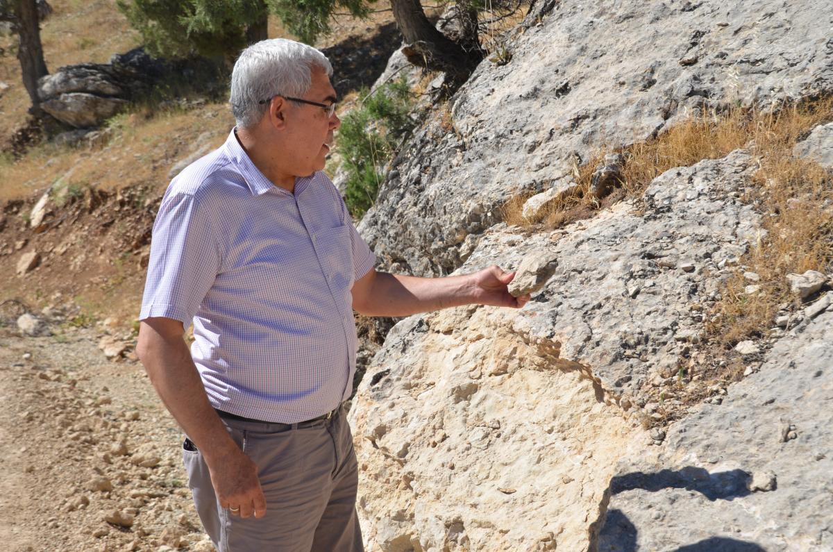 35 milyon yıllık fosil! - Resim: 1