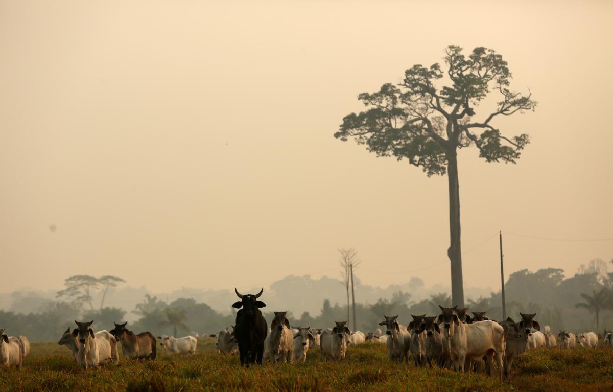 Amazon Ormanları 3 haftadır yanıyor - Resim: 1