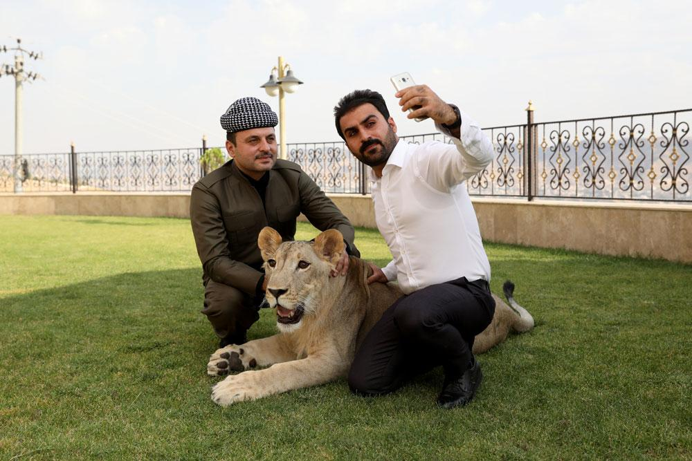 Yavru aslanı çocuklarından ayırmıyor, evinde bakıyor - Resim: 1