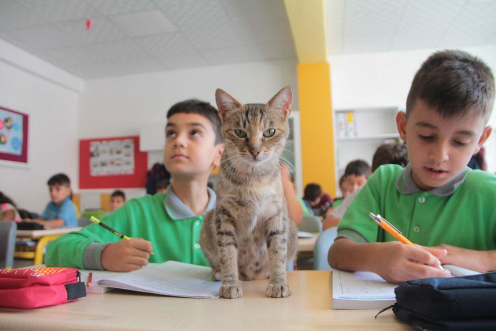 Okullu kedi Tarçın derste öğrenci, teneffüste anne oluyor - Resim: 1