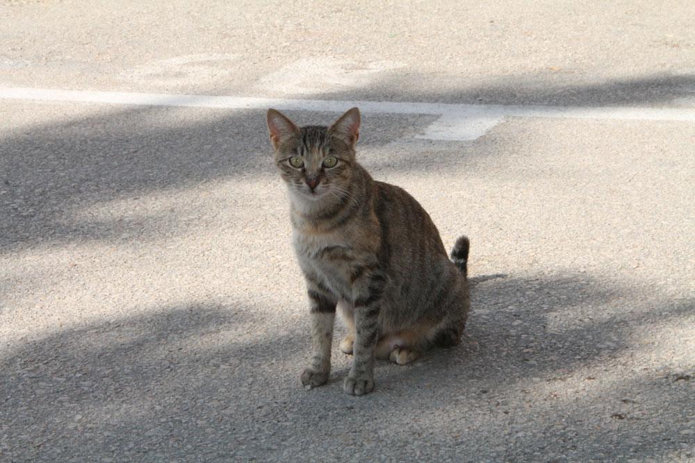 Okullu kedi Tarçın derste öğrenci, teneffüste anne oluyor - Resim: 3
