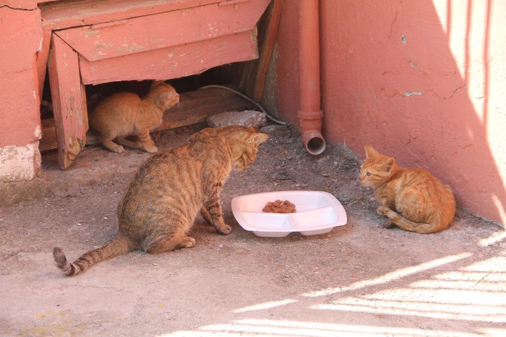Okullu kedi Tarçın derste öğrenci, teneffüste anne oluyor - Resim: 4