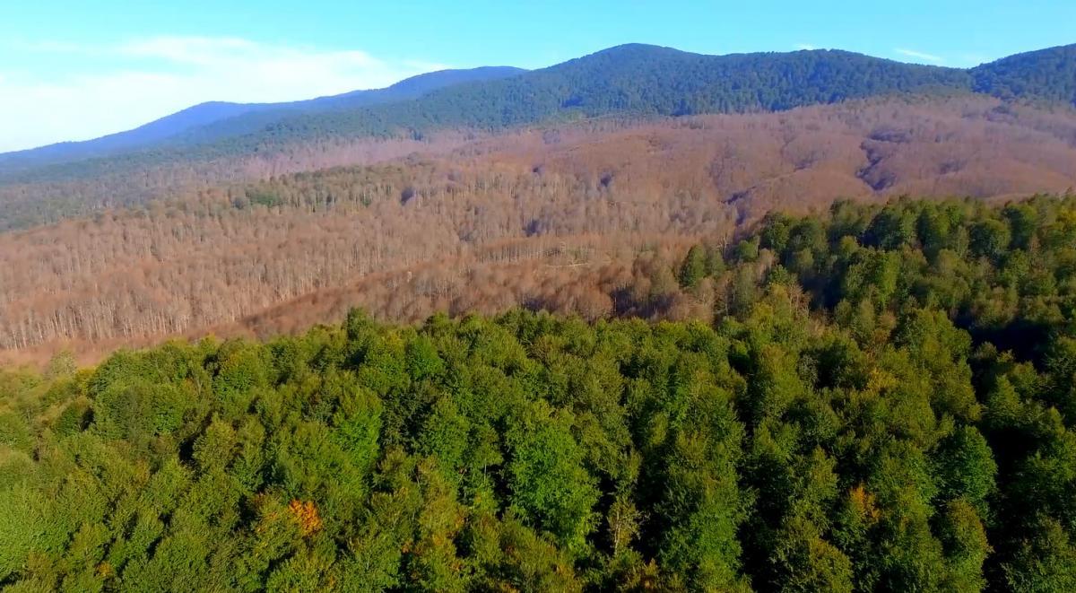 Tırtıllar ormanı böyle kuruttu... Kimse 'dur' diyemiyor - Resim: 1