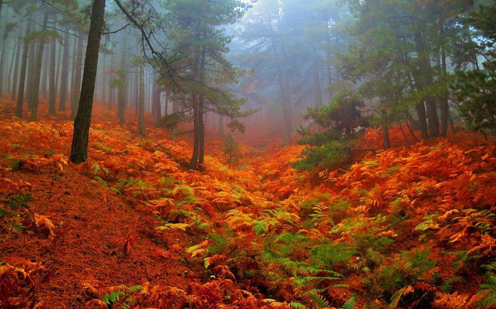 Kazdağları'nın kestane ormanları sonbahar renkleriyle büyülüyor - Resim: 1