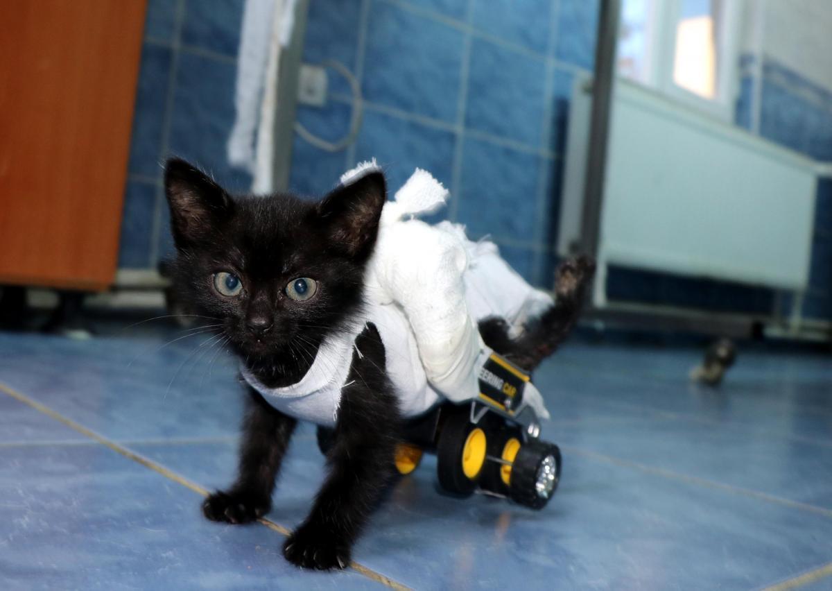 Arka bacakları tutmayan kediye oyuncak kamyondan yürüteç yaptı - Resim: 1