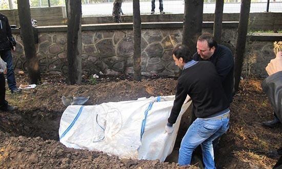 'Şişe burunlu yunus' iskeleti topraktan çıkarıldı - Resim: 1