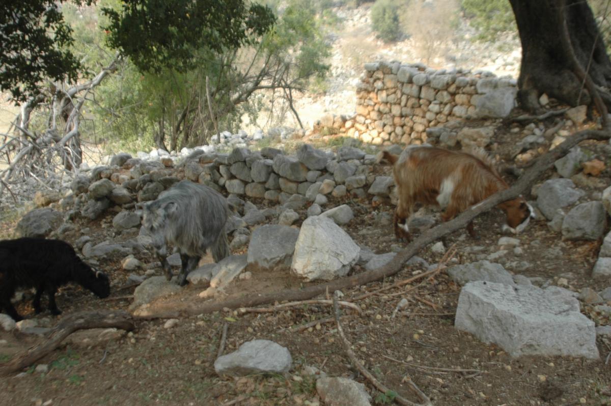 Keçileri otlatırken tarihi hamam ve kilise kalıntıları buldu - Resim: 3
