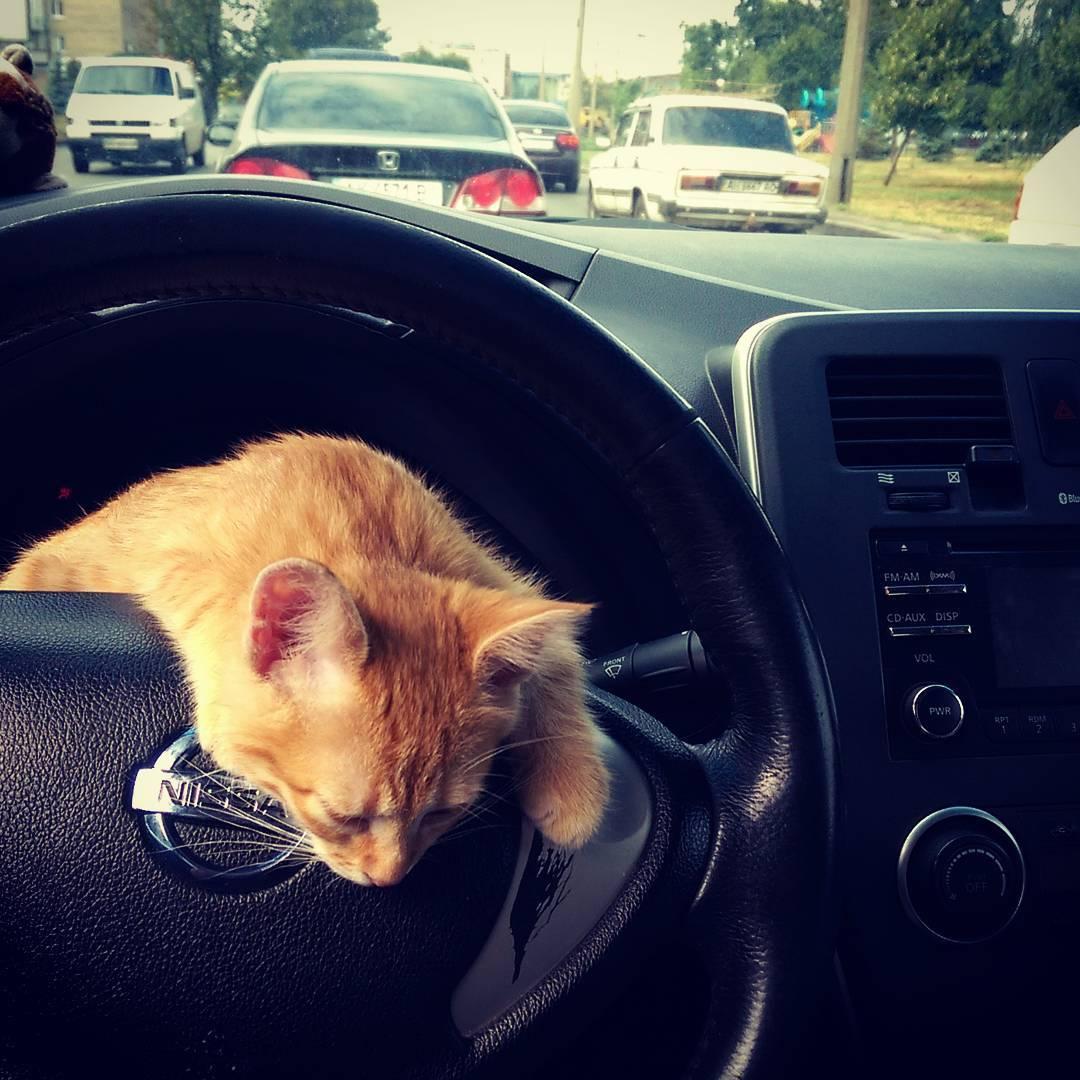 'Kedili taksi' ülkede çapında rakiplerini geride bıraktı - Resim: 1
