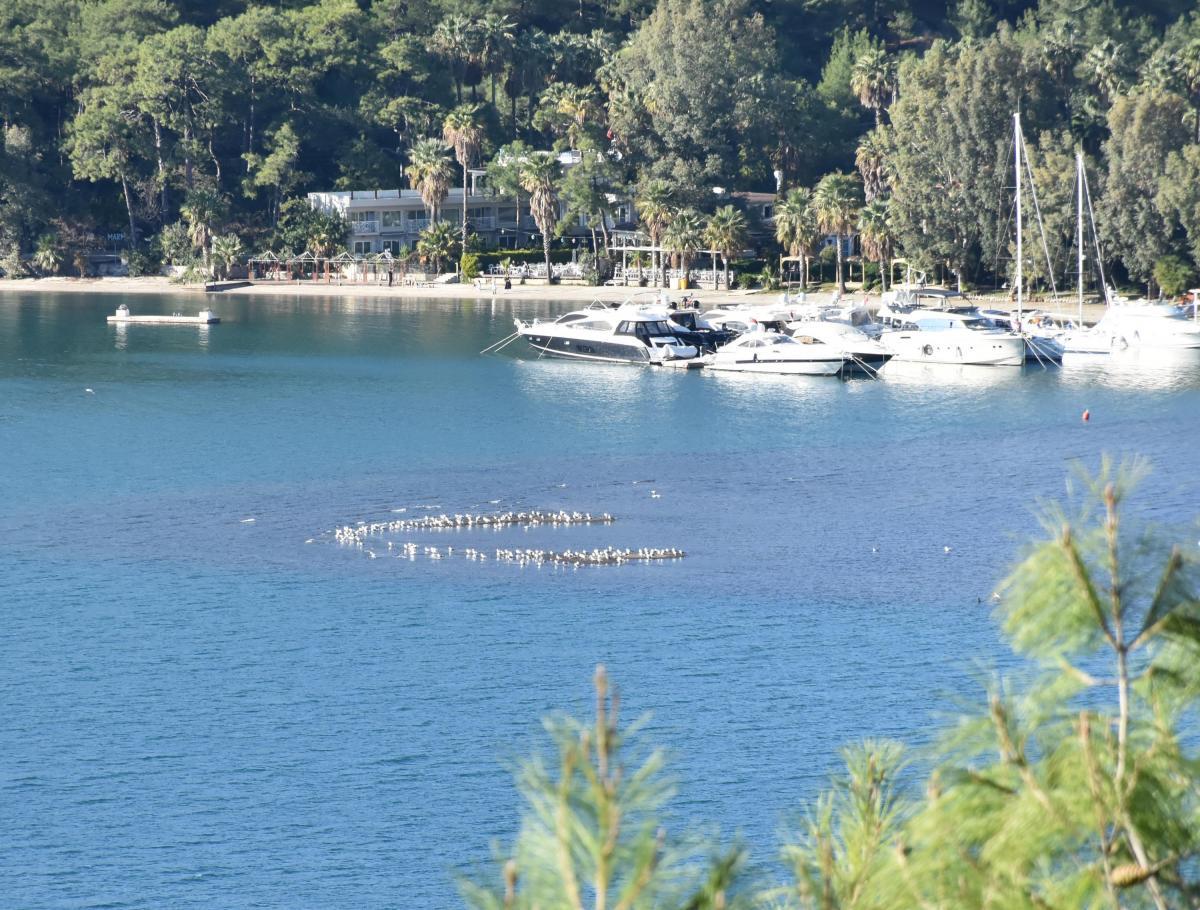 Marmaris'te deniz suyu çekildi, adacıklar oluştu - Resim: 2