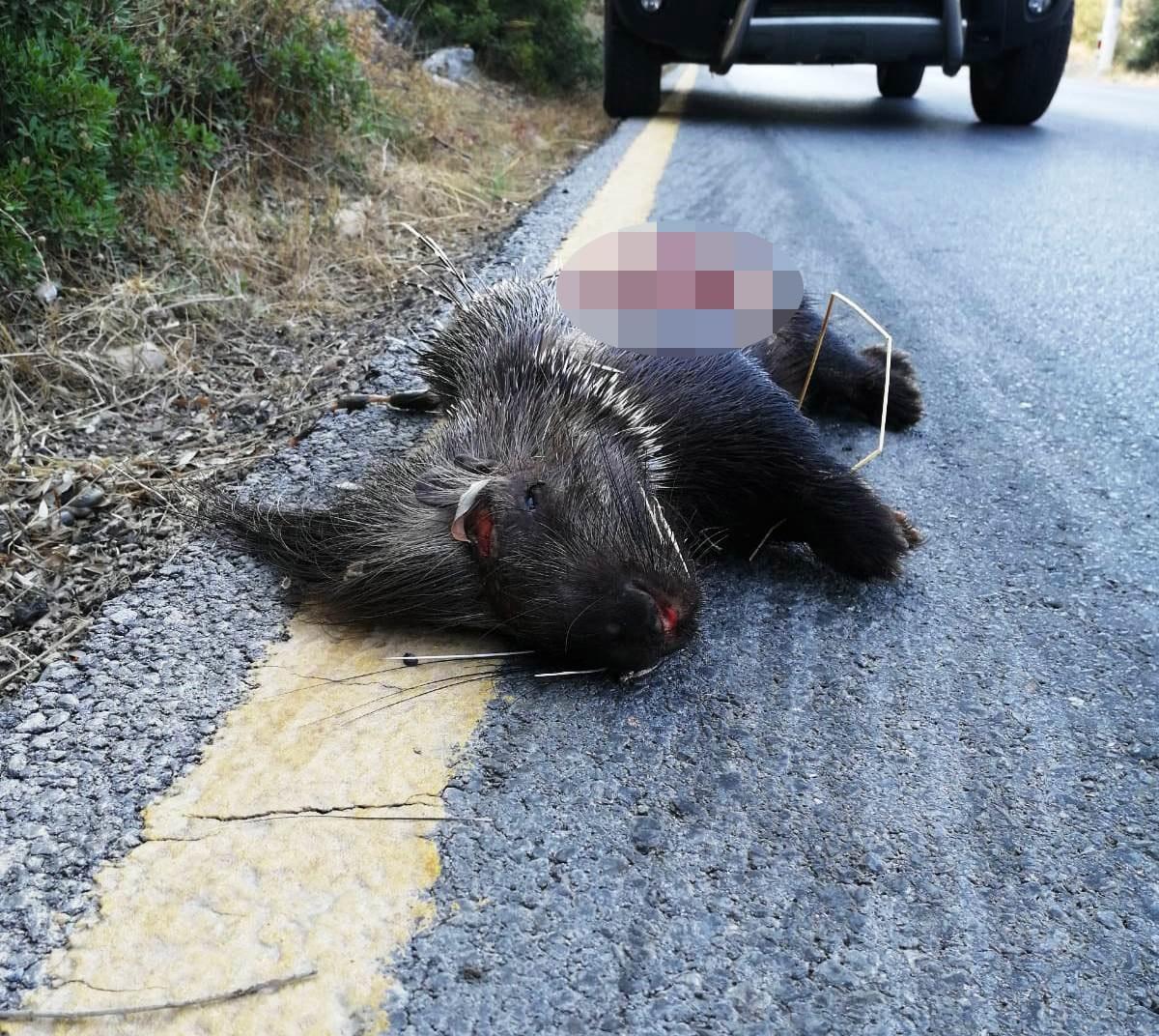 Koruma altındaki hayvan tüfekle vuruldu