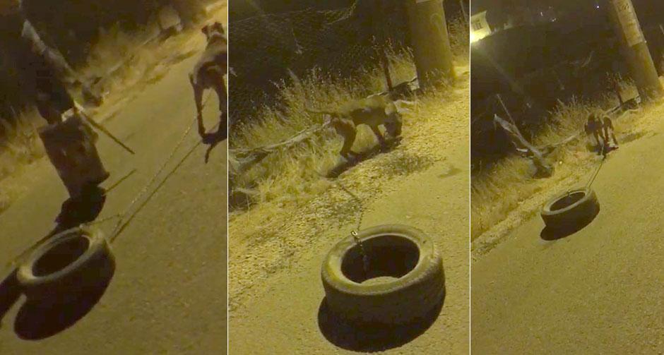 Köpeğe araç lastiği bağlayıp işkence yaptı!